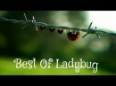 Minuscule - Best Of Ladybug / Best Of Coccinelle