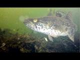 Подводная братва - наглые рыбы. Или зимняя рыбалка.