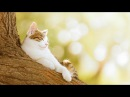 Релакс Красивая классическая музыка для души Ф Шопен Гармония и покой