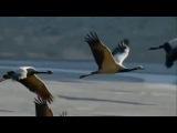Art of Noise - Robinson Crusoe