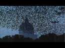 ULTIMATE MURMURATION PEREGRINE HUNTS STARLINGS IN ROME EARTHFLIGHT