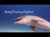 Дельфины. Любовь и секс