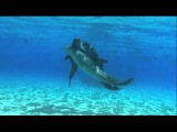 dolphins threesome sex, дельфины секс втроем