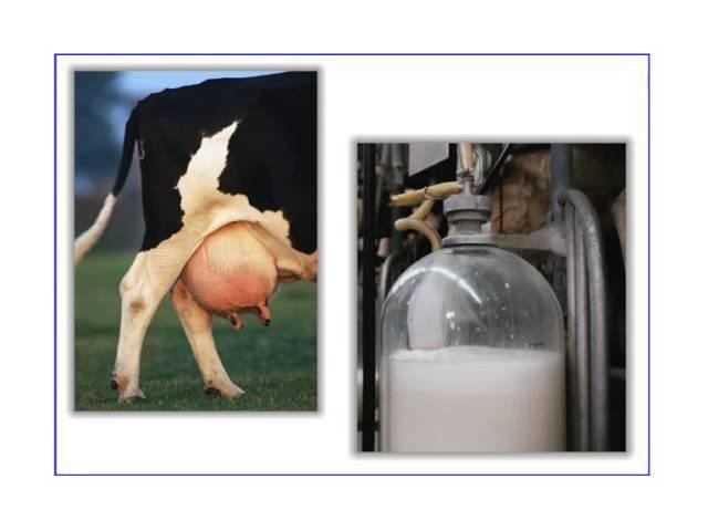Основы товароведения производственных товаров