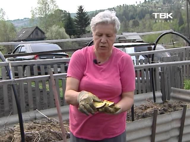 Советы тети Тани Посадка картофеля