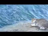 Рыбалка с котом. Кот просто взял и поймал рыбу