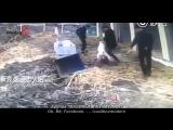 Неуправляемая собака нападает на лошадь, а потом на человека