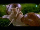 Microcosmos Le peuple de l'herbe (1996)