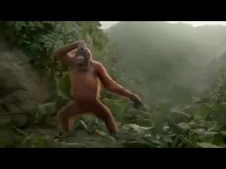 Танцующий орангутанг!