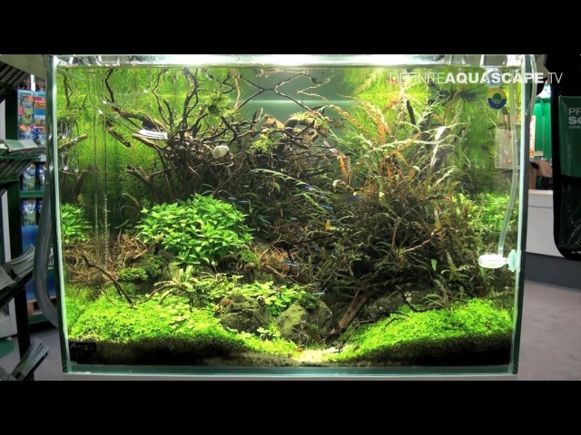 Planted aquariums of Heimtiermesse 2015, Hannover - part 9