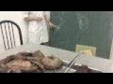 Мужская половая система. Анатомия человека.