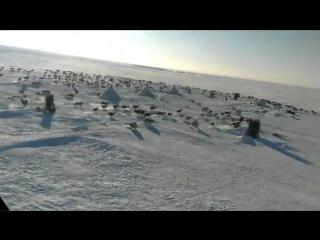 На Ямал я попал и пропал (красоты снежного Ямала).