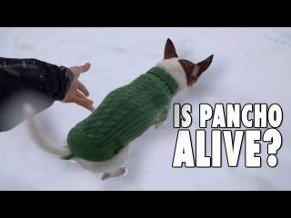 The REAL STORY of the chihuahua in the snow
