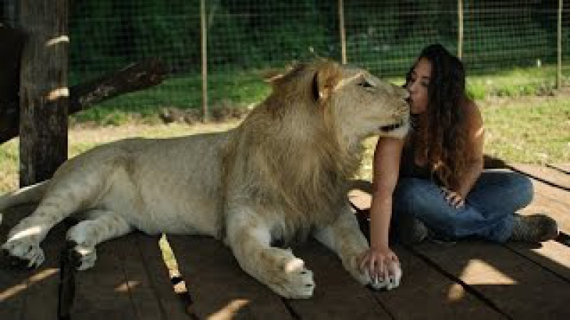 Lions Treat Woman Like the Leader of the Pride