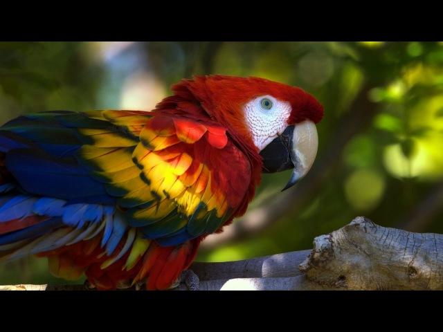 Дикая природа Австралии. Большие попугаи. Документальный фильм. » Freewka.com - Смотреть онлайн в хорощем качестве