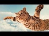 Смешные коты и кошки. Прикольные видео #12   2015