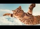 Смешные коты и кошки. Прикольные видео 12 / 2015