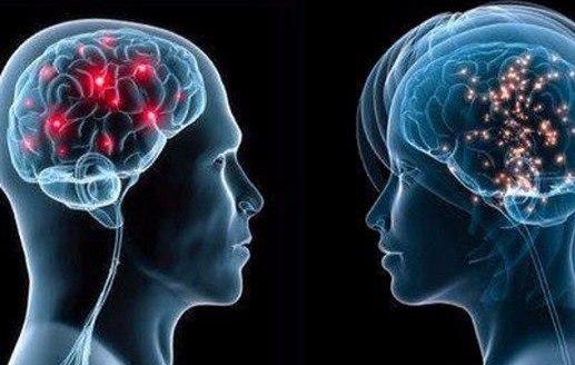 «Мужской» и «Женский» мозг: Существенных отличий нет