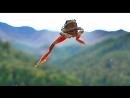 European tree frog. Phenomenal leap. Квакша. Hyla arborea