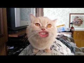 ВОТ ЭТО ПОВОРОТ! Реклама канала от кота Валеры!