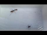 Плотоядный богомол против паука