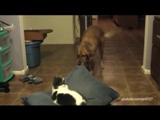 Кошачий беспредел!