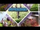 Кормление Мухами колонию Myrmica Sp 4к
