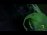 Untamed Americas - Tube-Lipped Nectar Bat