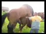 Спаривание_лошадей
