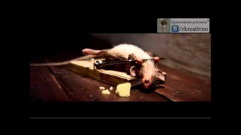 Реклама сыра. Мышь в мышеловки.