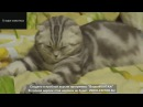 приколы с котами ,tricks with cats,lustige katzen