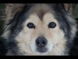 Собачья Жизнь - Наш ответ Кобзону