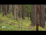 Приокско-террасный заповедник (фильм RTG)