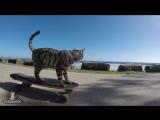 SKATEBOARD PUSHING CAT