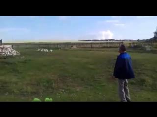 Дрессировка гусей