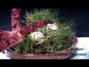 Clathrus archeri (Devils Fingers - Octopus Stinkhorn fungi) erupting from their eggs time lapse