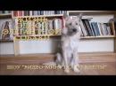 Видео-минутка от Клёпы * Серия 1 *
