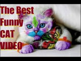 Funny Cat & Cute Kittens Fail Animals Videos Best Funny Kitty Cat Video № 28 | Morsomme Katter № 28