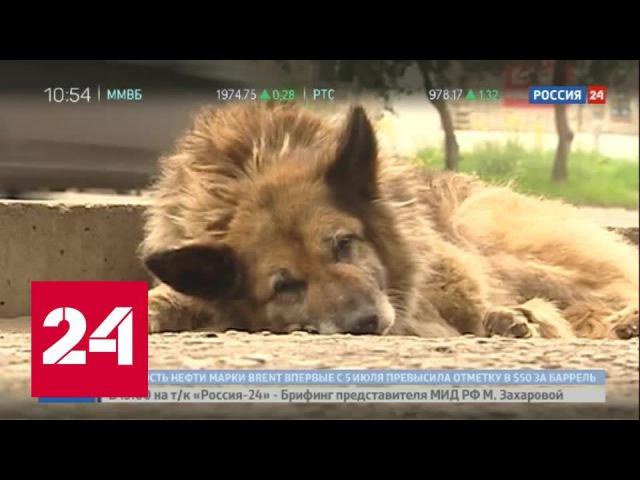 Собачья преданность: пес из Комсомольска-на-Амуре побил рекорд Хатико