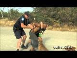 COPS Video - Bad Boys