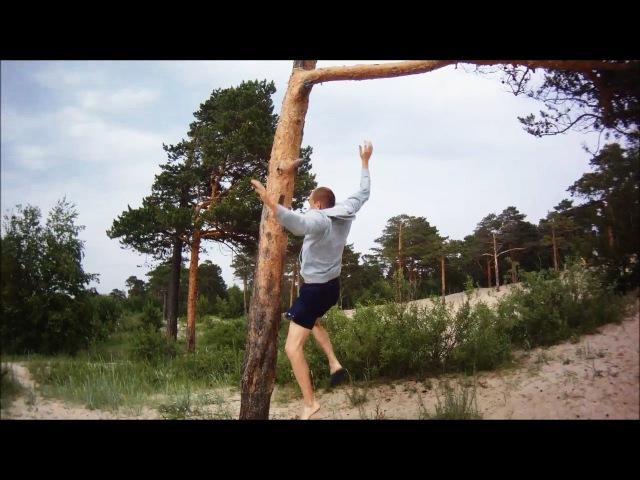 Залаз на дерево и падение с него. Берег Белого моря (18.06.16)