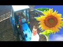 Убиваем сорняки. Бороним посевы подсолнечника на тракторе ЮМЗ 6КЛ. #СельхозТехника ТВ № 20