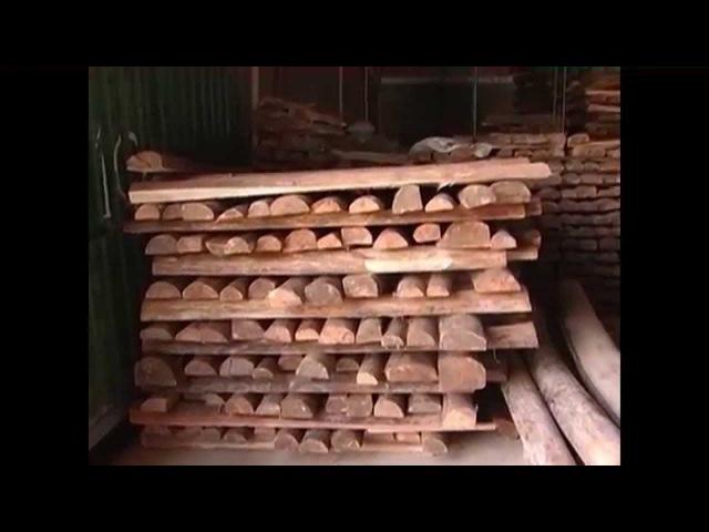 Producion de Balso, Madera de Balsa - TvAgro By Juan Gonzalo Angel