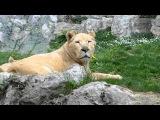 Зоопарк в Италии. Zoo le Cornelli vicino al Bergamo