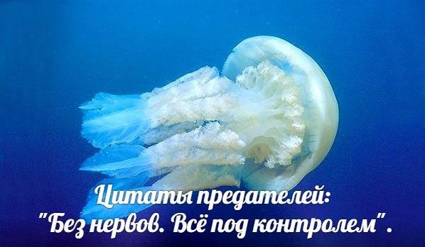 Ye_FiWp8rgg.jpg