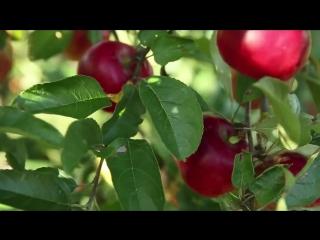 Пермакультура. Чудо ферма Стефана Собковича в Квебеке