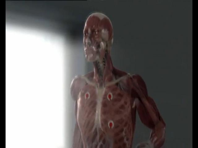 Discovery Тело человека Сила мышц