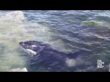 WHALE RESCUE: Saving a stranded Orca in B.C.