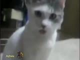 Говорящие коты и кошки   смотрите лучшие приколы про котов