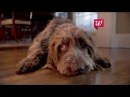 Walgreens Give Unexpected Joy this Holiday TV Commercial ad 2015 advert